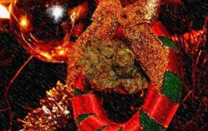 10 Strains for the Holiday Season