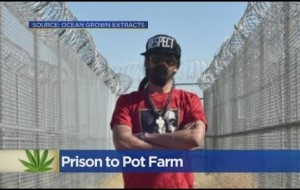 Bob Marley's Son Plans to Turn Prison into Pot Farm