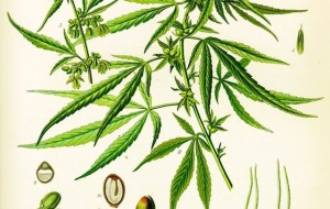 9 Ancient Uses Of Cannabis You Probably Didn't Know