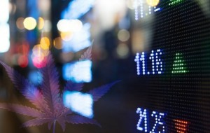 Best International Marijuana Stock