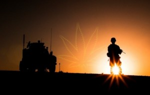 More veterans parlaying their military skills into cannabis careers