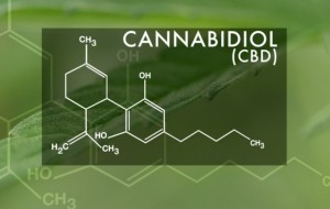 What is cbd oil? The definitive guide to cannabidiol and how to use it properly