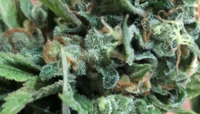 Grow Hack: Prevent Mold During Growth, Curing and Storage