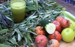 5 IMPORTANT REASONS TO ADD CANNABIS LEAVES TO RAW JUICE RECIPES