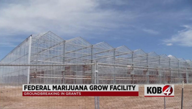 Federally sanctioned marijuana grow operation to open in New Mexico